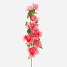 Ветки и одиночные цветы