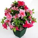 Цветы в плошках, вазы.
